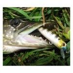 Pontoon 21 Crack Jack 38SP-MR Воблер риболов