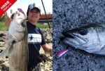 APIA BIT V 26g  рибар улов