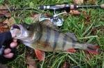 Crazy fish VIBRO FAT 10см Улов1