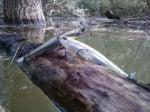 DUO Realis Spinbait 80 Воблер примамка риболов 4